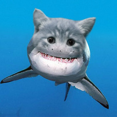Avatar SharkCatnado