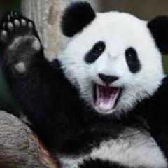 Avatar PandasGoB00m