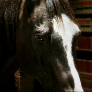 Avatar Bad_Horse