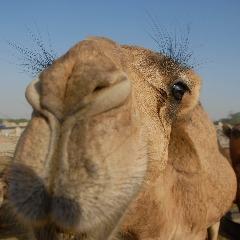 Player CameL-_- avatar