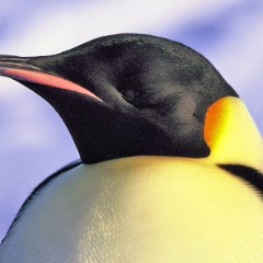 Avatar Penguinxz