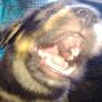 Player GORO48 avatar