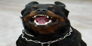 Avatar Kamphund