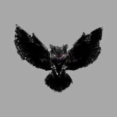 Player berd- avatar