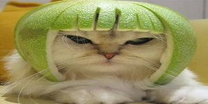Avatar pjero-