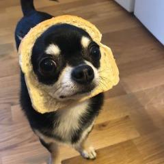 Player ninjahunden avatar