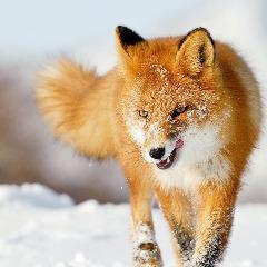Avatar FOX69