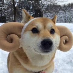 Avatar DogeTheDog
