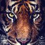 Player TurPpa avatar