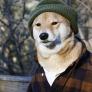 Avatar bewareofdog