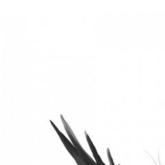 Avatar dandelion