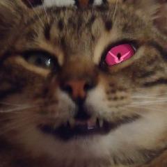 Player PinkiePieq avatar