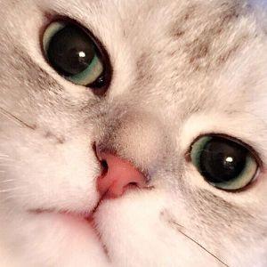 Player NitroMehmet avatar
