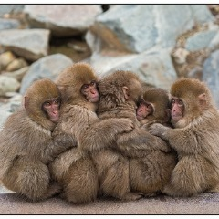 Monkey push
